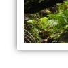 [Tutoriel]Cadre sur une image avec GIMP